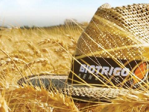 Biotrigo Institucional