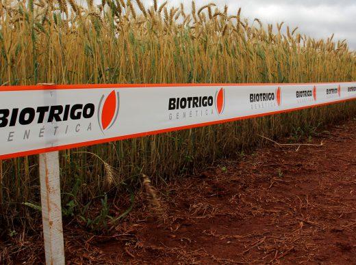 Biotrigo